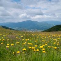 igor-melika-karpaty-vododylniy-20-22-06-2014-60c